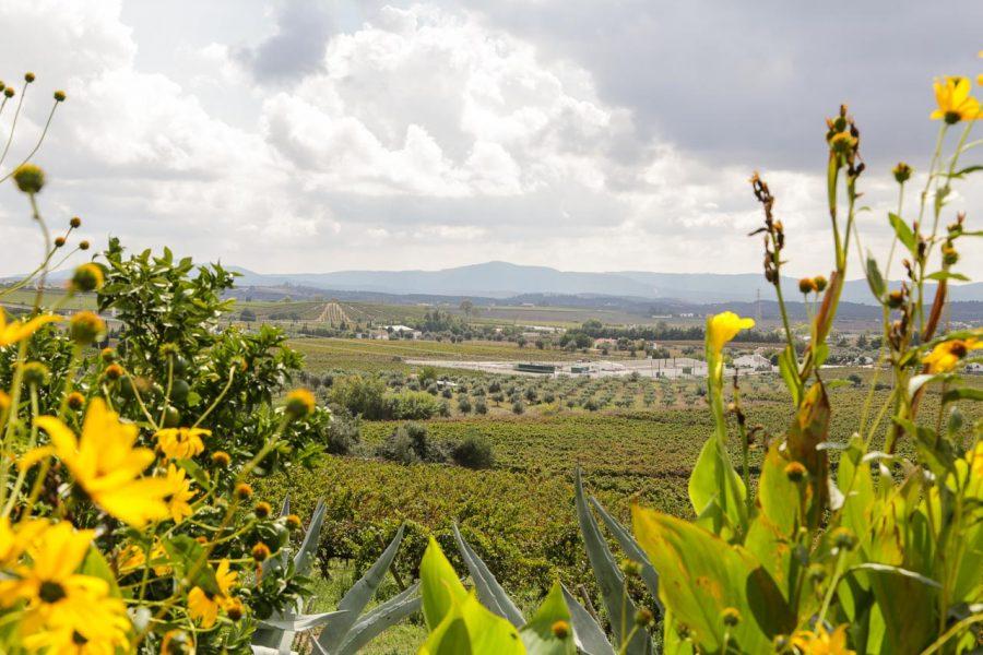 Blick von der Weinkellerei Encostas de Estremoz